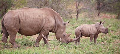 Joanesburgo , Kruger National Park , Pretoria , Cidade do Cabo