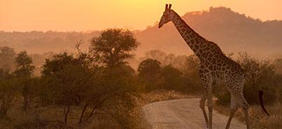 Cidade do Cabo, Joanesburgo , Kruger National Park , Pretoria
