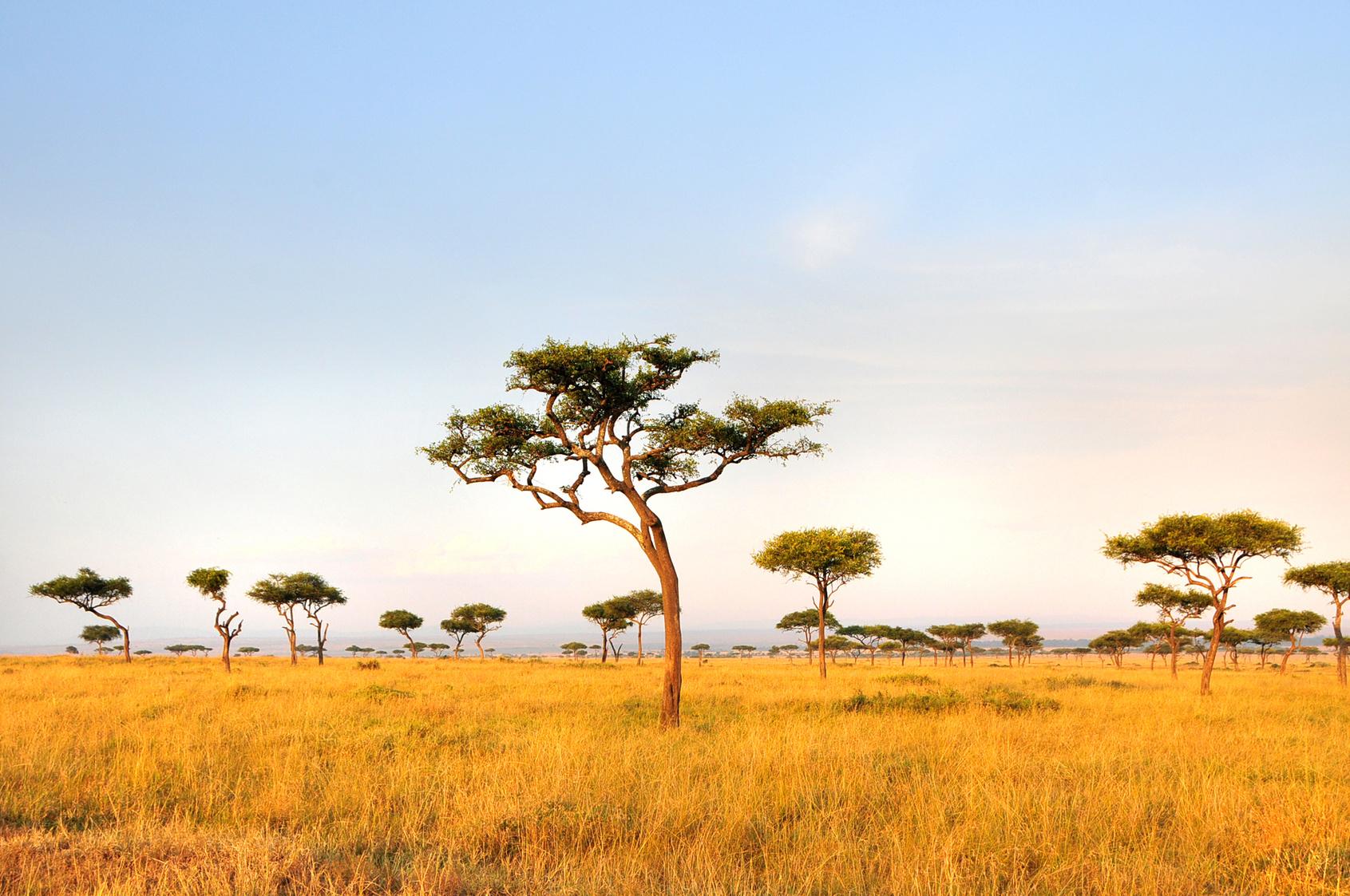 Lake Nakuru , Nairobi , Masai Mara , Aberdare National Park- Quênia, Monte Quênia- Quênia